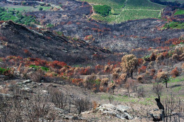 À Macchia en Italie, une garrigue s'enflamme facilement en saison