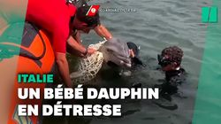 Un bébé dauphin coincé dans un filet sauvé par des garde-côtes en