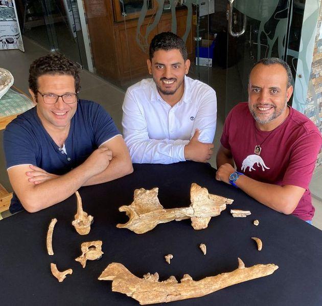 エジプトのマンソウラ大学古脊椎動物学センターでフィオミケトゥス・アヌビスの化石を囲んで座る古生物学者のモハメド・アンタル氏、アブドゥラー・ゴーハル氏、ヒシャム・サラーム氏