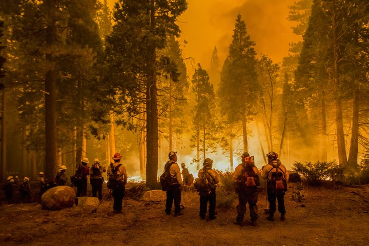 Firefighters stand by flames at the Caldor fire after starting a Backfire. The Caldor fire has grown to over 130,000 acres and threatens to grow to the Tahoe basin. These images where taken at a backfire set by crews in an effort to gain control on the Caldor fire.