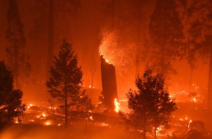 In this long exposure photograph, a burning tree emits embers as flames from the Caldor fire continue to burn in Twin Bridges