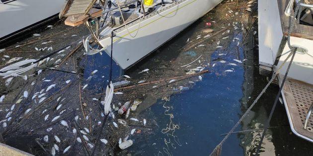 Centinaia di pesci morti sono spiaggiati sulla costa di Focene, sul litorale di Fiumicino, 27 agosto 2021. ANSA/ Telenews