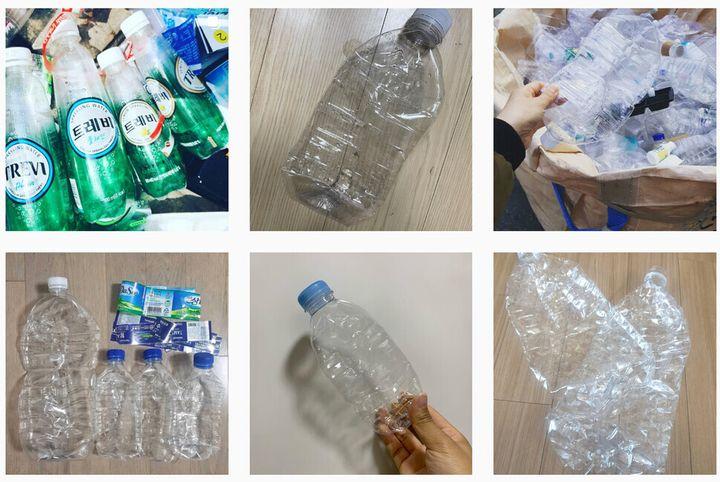 SNS에 올라온 '페트라떼' 인증 사진들.