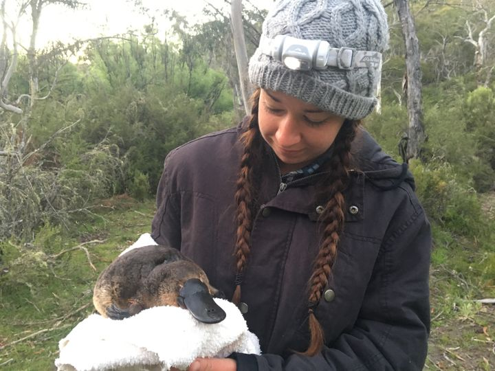 A study conducted last year by Gilad Bino and his colleague, Tahneal Hawke (above, found dramatic declines in platypus populations nationwide.