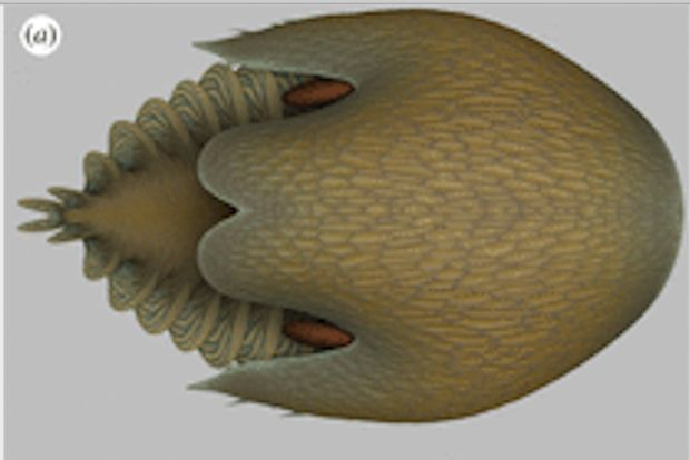 Scientists have discovered a gigantic prehistoric relative of the horseshoe crab in the 500-million-year-old Burgess Shale in