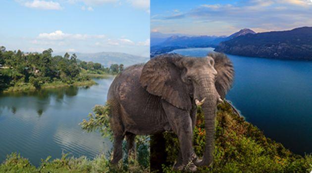 Selon le canular, des éléphants des steppes de Wembere seraient transportés de l'Ouganda...