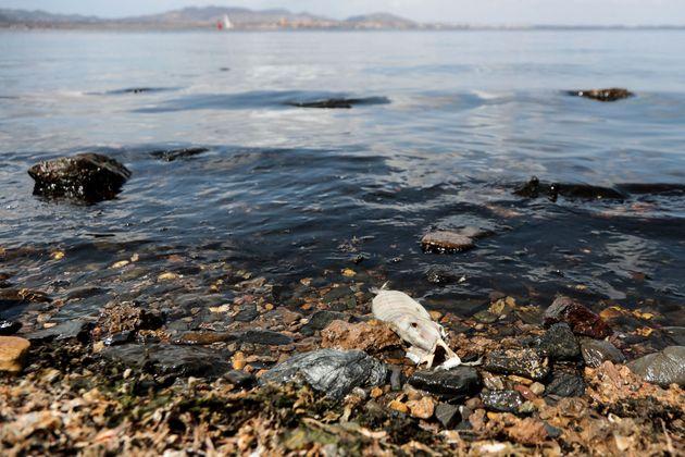 Un pez muerto se descompone en la costa de Puerto Bello de la Manga, el 25 de agosto de