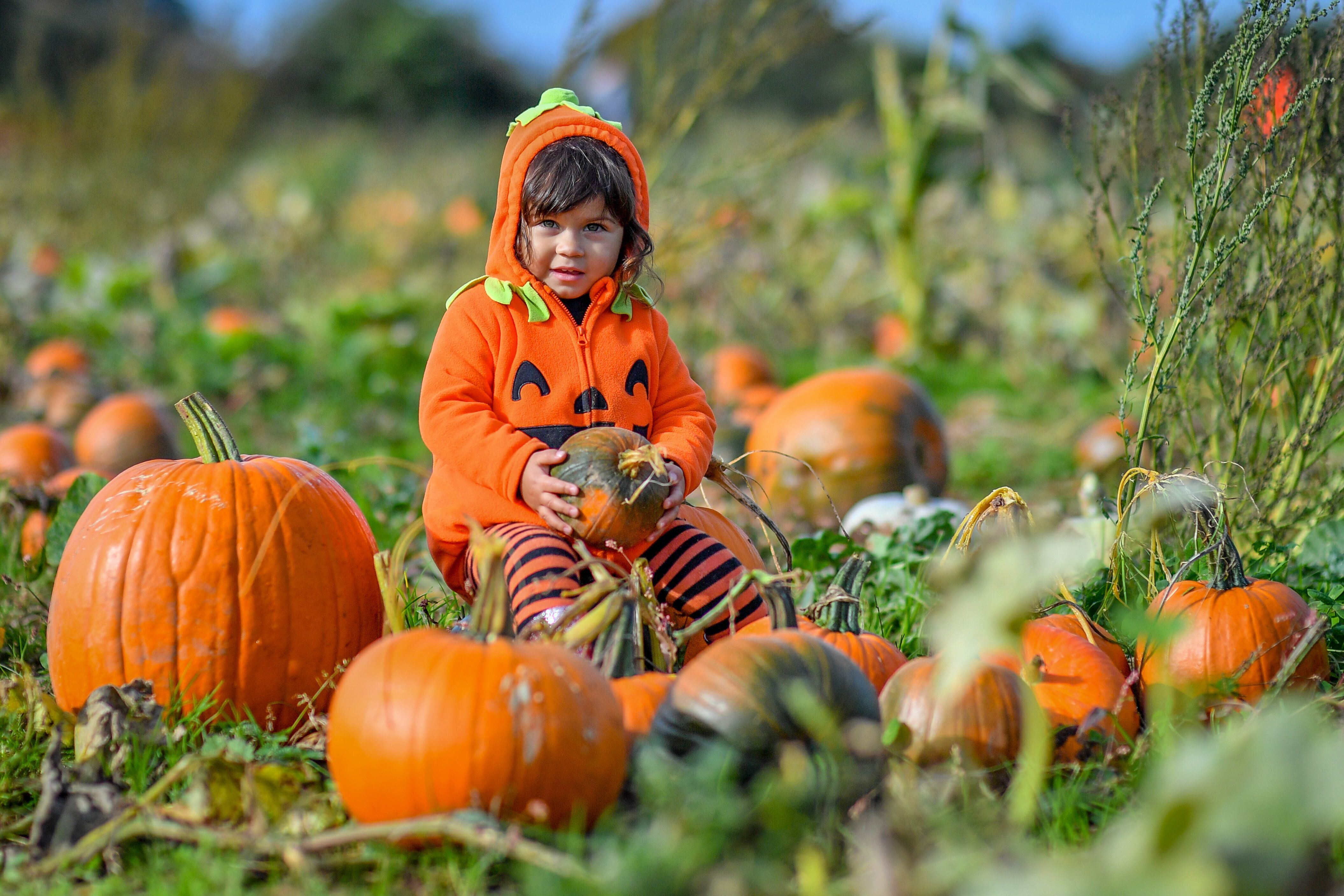 20 Pumpkin Patches To Visit For The Best Family Fun (And Pics)
