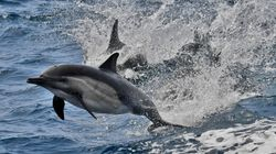 1,400 Dolphins Slaughtered During A Faroe Islands' Recording-Breaking