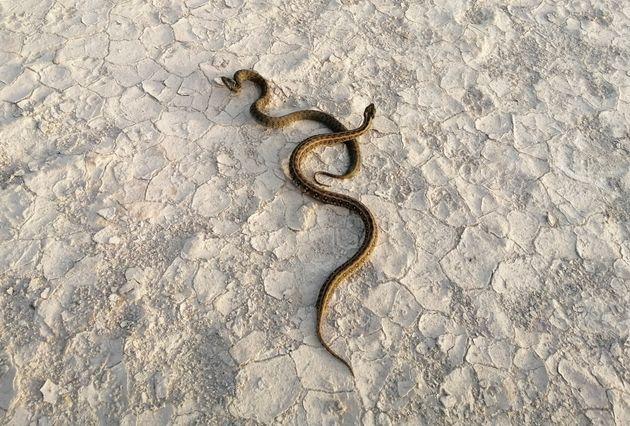 Έρευνα: Τα φίδια οφείλουν την...επιτυχία τους στον αστεροειδή που εξαφάνισε τους