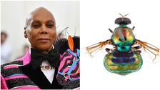 New Rainbow Fly Species With 'Legs For Days' Named After RuPaul