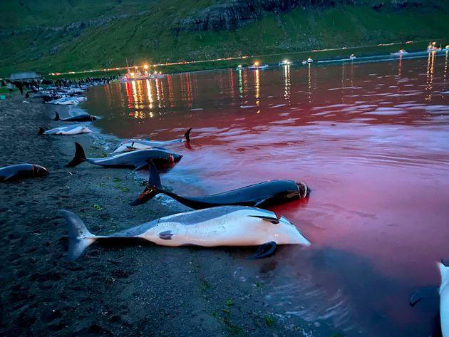 돌고래 사냥