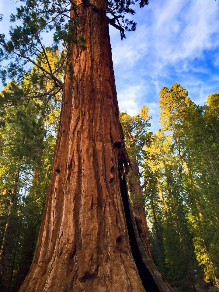 Photo taken in Sequoia National Park.