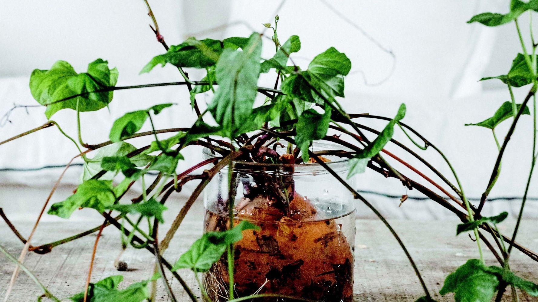 5 noyaux et boutures à faire pousser facilement chez soi