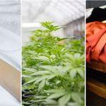 Il referendum sulla cannabis travolge i partiti (di F.