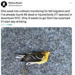 野鳥がニューヨークで大量死...高層ビルに衝突か。年間6億羽が犠牲の衝撃【写真・動画】