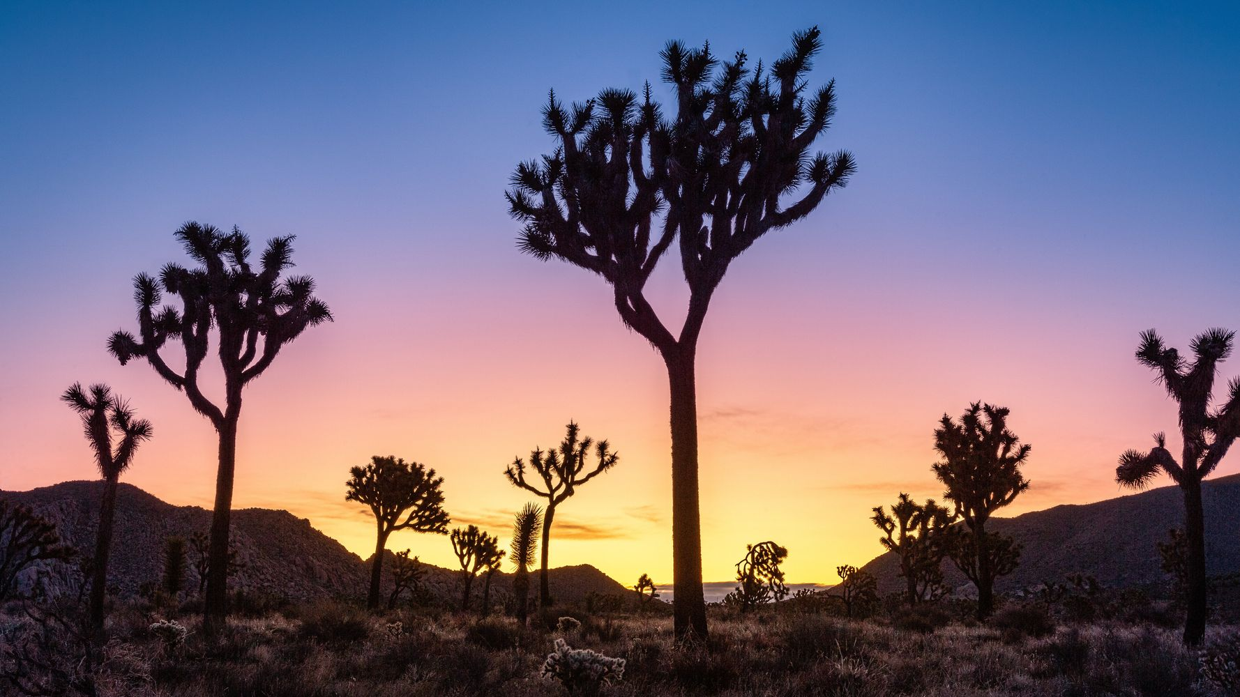 Trump Administration Broke The Law In Refusing To Protect Joshua Trees, Court Rules