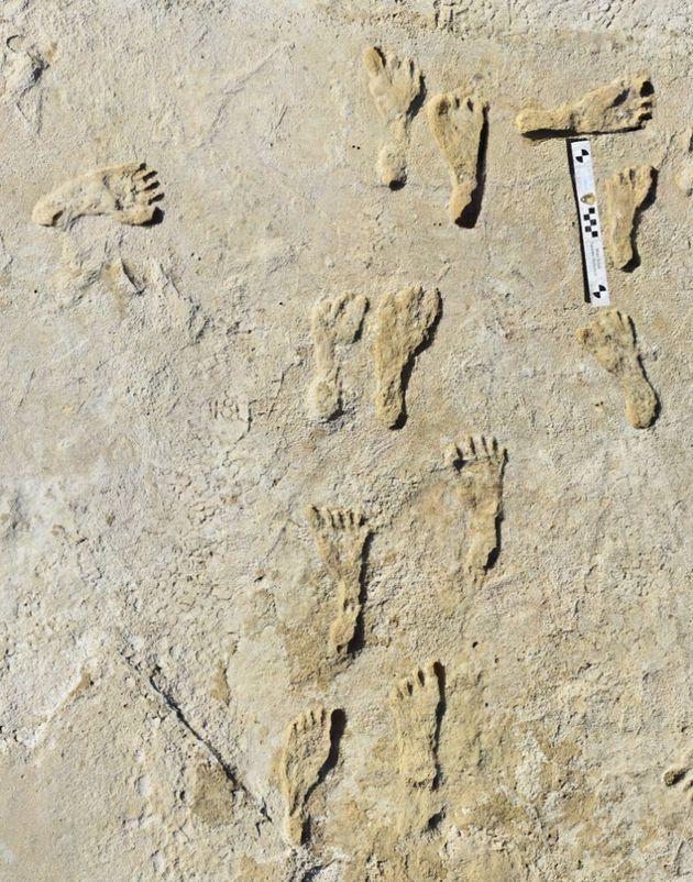 発見された人類の足跡化石