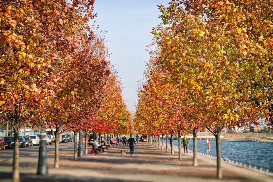 Maple alley of on Sugar beach - beautiful parkland in