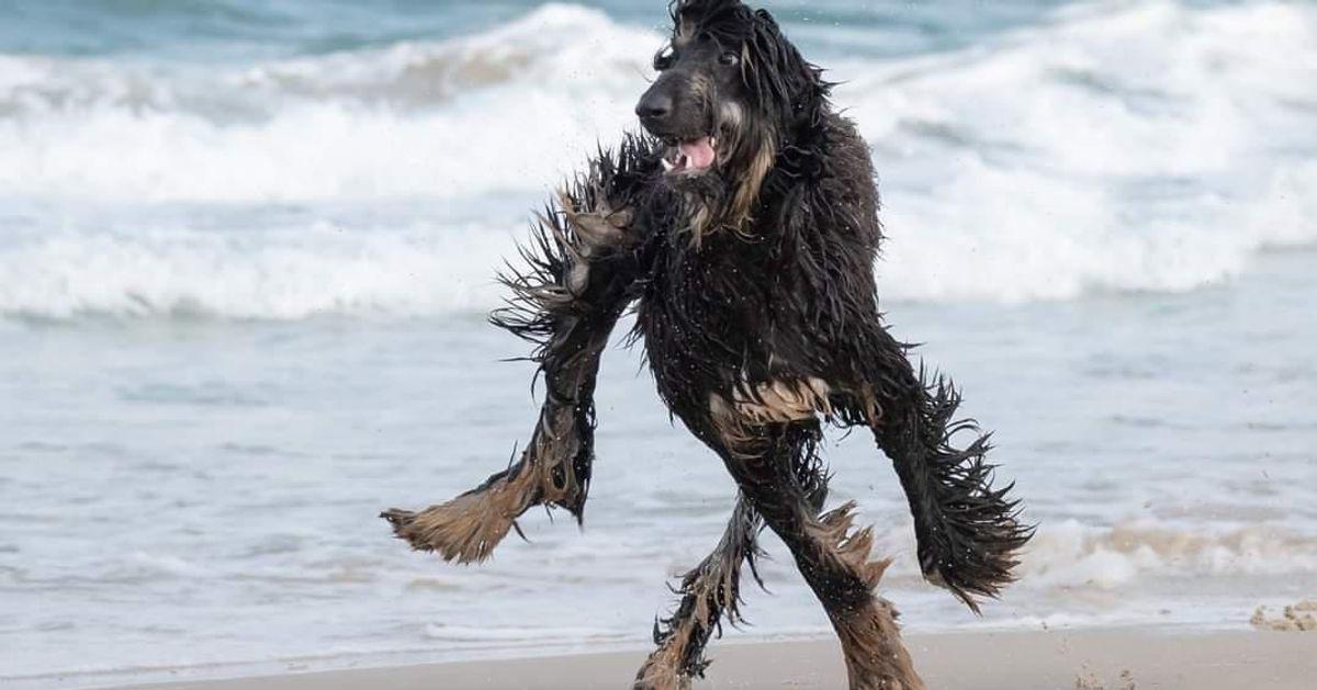 Cette photo de chien qui court sur la plage va vous rendre fou