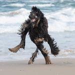 Cette photo de chien qui court sur la plage va vous rendre