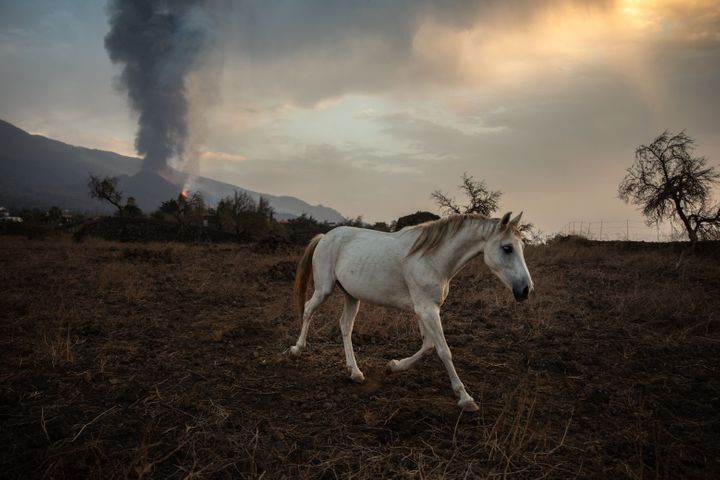 A horse on a farm in Tacande de Abajo, while the Cumbre Vieja volcano in La Palma returns to expel lava and pyroclasts after