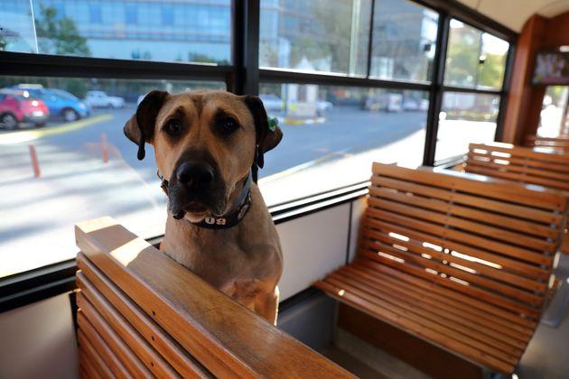 イスタンブールの公共交通機関を乗り継ぐ犬・ボジ