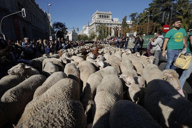 Madrid no se duerme contando ovejas