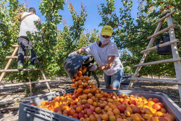 Farm to Fork, per un sistema alimentare più sostenibile
